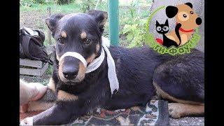 Лечение вирусного энтерита у собак. Чем начинать кормить после болезни?