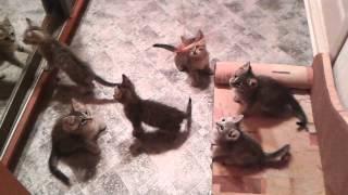 Полосатые котята в дар