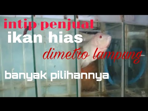 PENJUAL IKAN CUPANG HIAS ONLINE from YouTube · Duration:  12 minutes 23 seconds