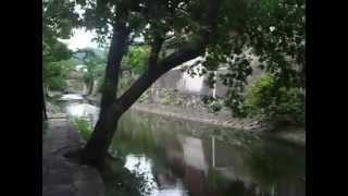 真夏の近江八幡市の水郷をビデオで撮りました。Ohmihachiman is so beau...