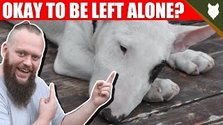 Can a BULL TERRIER be left alone?