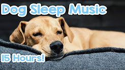 Dog Sleep Music - 15 hours of Relaxing Melodies to keep your dog asleep! 🐶