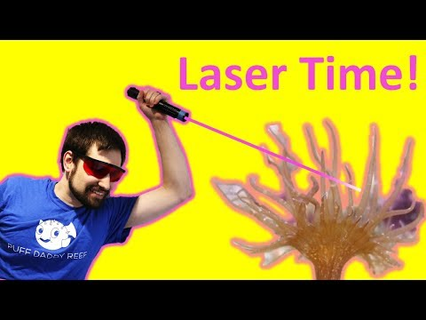😎 Vaporizing Aiptasia with Lasers! (Wicked Lasers S3 Spyder 3 Arctic)
