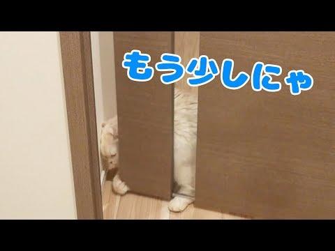 ついに猫が自力でドアを開けるように・・・