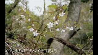 検索散歩 植物図鑑 宇賀渓 自然観察会 資料 として制作しました。 http:...