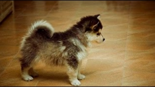 Funniest Puppy Fights and Funny Fails   Top 10 Funny Little Dog Videos   Puppy Vines 2015