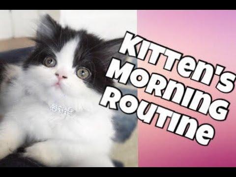 MY KITTEN'S MORNING ROUTINE