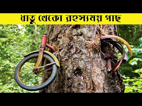 A Tree That Eats Metal Was Just Discovered In The Philippines || Bengali