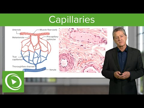 Capillaries – Histology | Medical Education Videos
