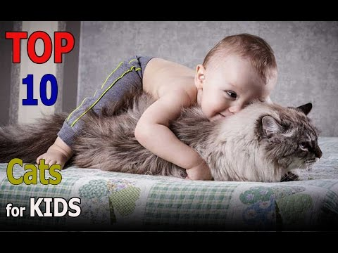 Top 10 cat breeds for kids | Top 10 animals