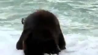 Video Elefante mergulha em Aver-o-Mar Póvoa de Varzim download MP3, 3GP, MP4, WEBM, AVI, FLV Desember 2017