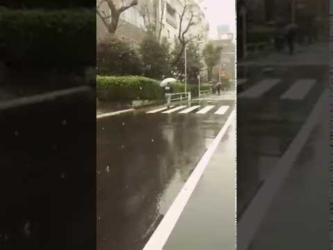 First November snowfall of the year in Tokyo 2016