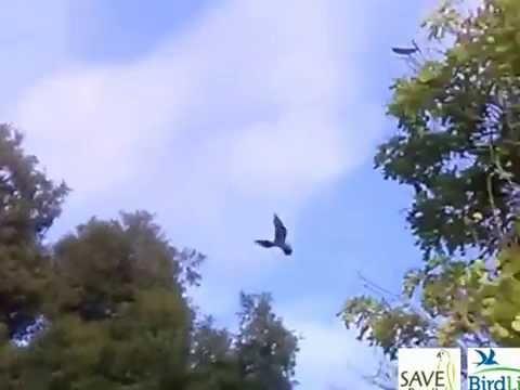 RARE bird spotted in Brazil