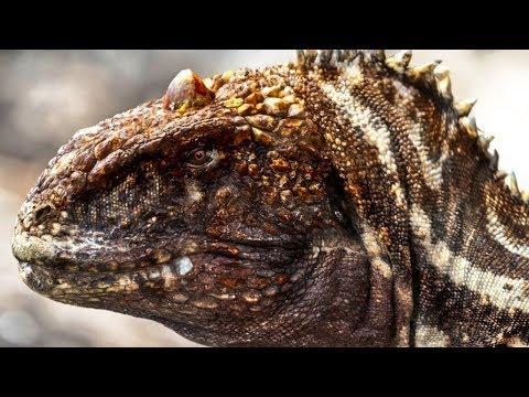 majungasaurus---the-one-horned-ruler-of-madagascar