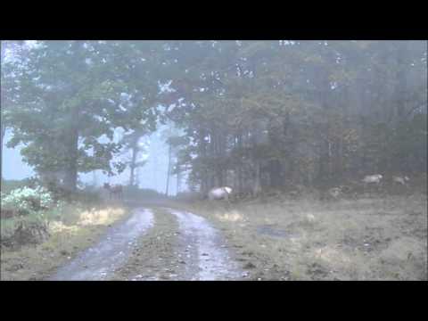 Morning Walk-Elk County PA 10/01/12