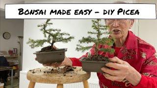 Bonsai Made Easy - DÏY Picea