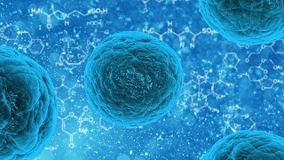 These Nutrients Boost Stem Cell Function