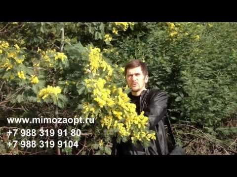 Лучшая доставка цветов - Флора2000.ру.из YouTube · С высокой четкостью · Длительность: 26 с  · Просмотры: более 171.000 · отправлено: 19.08.2014 · кем отправлено: Flora2000.ru - доставка цветов