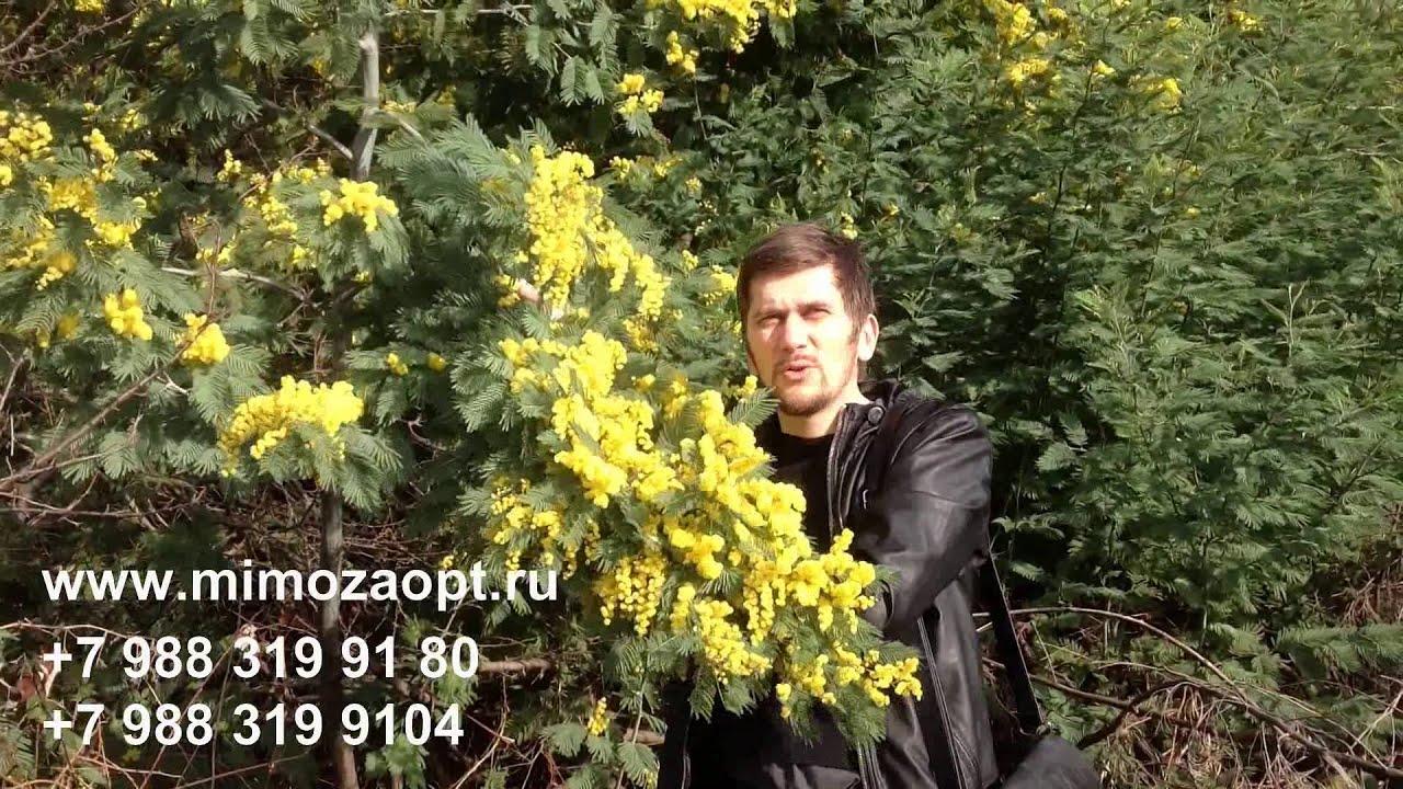 Голландская компания jaaz flowers & plants один из крупнейших поставщиков свежесрезанных цветов. У нас вы можете купить живые цветы оптом с цветочного аукциона в голландии, а также, комнатные и садовые растения, выращенные на элитных плантациях голландии, дании, бельгии и других.