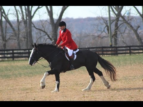 Fox Hunting In Virginia. Hounds And Horses. Part 1 Of 4