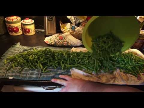 Blanching And Freezing Green Beans