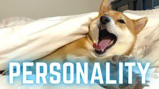 SHIBA INU PERSONALITY FULL DISCLOSURE | Super Shiba
