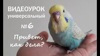 """🎧 Учим попугая говорить. Урок 5.2: """"Привет, как дела?"""""""
