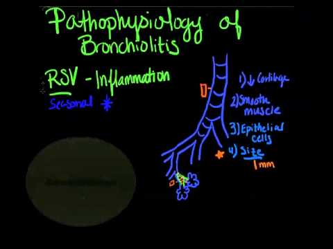 bronchiolitis pathophysiology clayton and berro