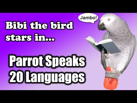 Bibi the African Grey Parrot Speaks 20 Languages