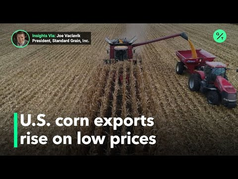 Competitive prices for U.S. corn have caused an increase in exports