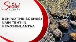 Näin tehtiin hevosenlantaa | Behind The Scenes |Salatut elämät