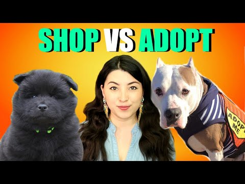 Getting A Puppy? WATCH THIS FIRST! Adopt Or Buy A Dog?