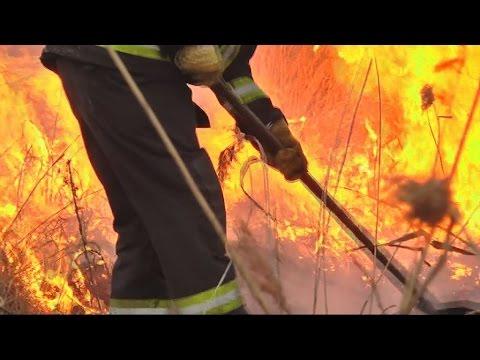 Tűzoltó portré