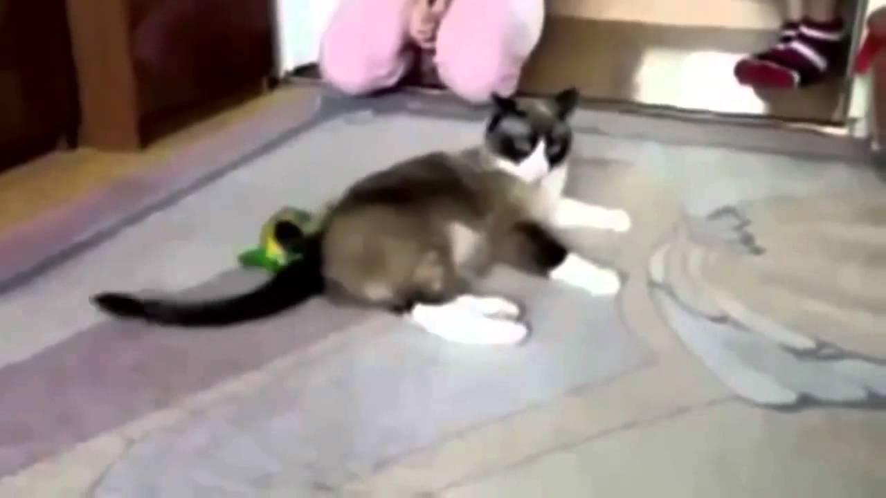 Компилация от смешни клипчета с животни