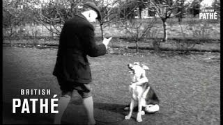 Dog Training (1954)