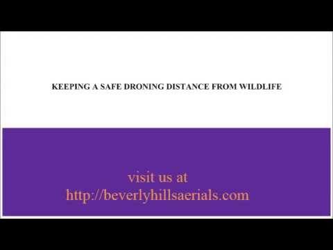 KEEPING A SAFE DRONING DISTANCE FROM WILDLIFE   beverlyhillsaerials
