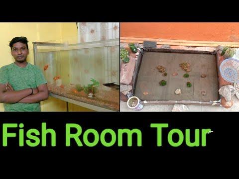 Fish Room Tour