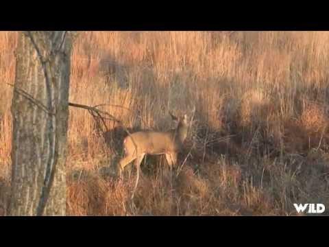 Hunting Whitetail in Nebraska