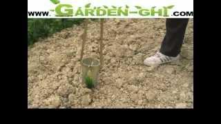 Ortolano Pianta Tutto By Gardenghicom