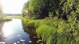 Рыбалка на поплавок и кружки  в Карелии . еле добрался до озера
