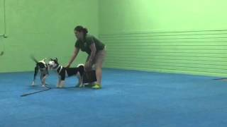 Dog Aggression Assessment - Miami Dog Training