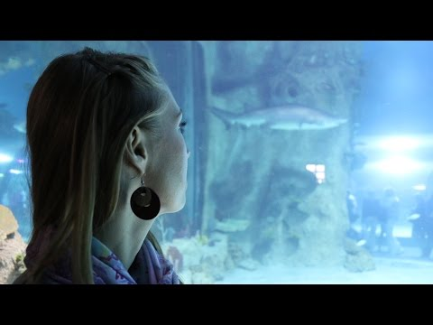Москвариум: очередь, косатки, акулы (Oceanarium in Moscow)