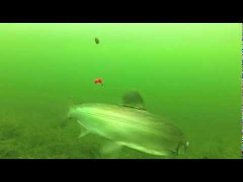 Ice Fishing In Alaska (under Water Footage)