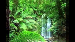 imágenes de bosques y parques