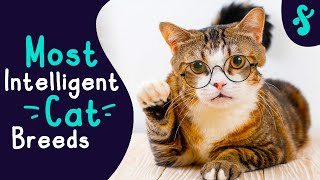 Top 10 Most Intelligent Cat Breeds in the World   Furry Feline Facts