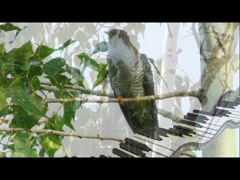 Практическое мультимедийное пособие «Карнавал животных»( К.Сен-Санс) Кукушка видео