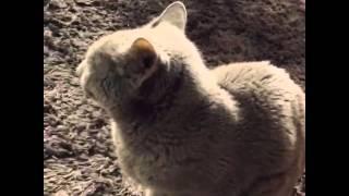 オムニバス映画「4/猫 ねこぶんのよん」スタッフ・キャストの猫ちゃん...