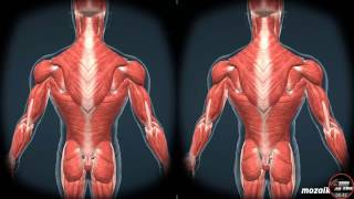 VR HUMAN BODY HD 3D SBS
