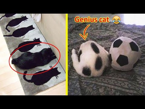 These Cats Can Beat You At Hide And Seek 😹