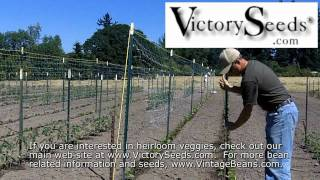 Using Horticultural Netting (aka Crop Netting) To Trellis Pole Beans